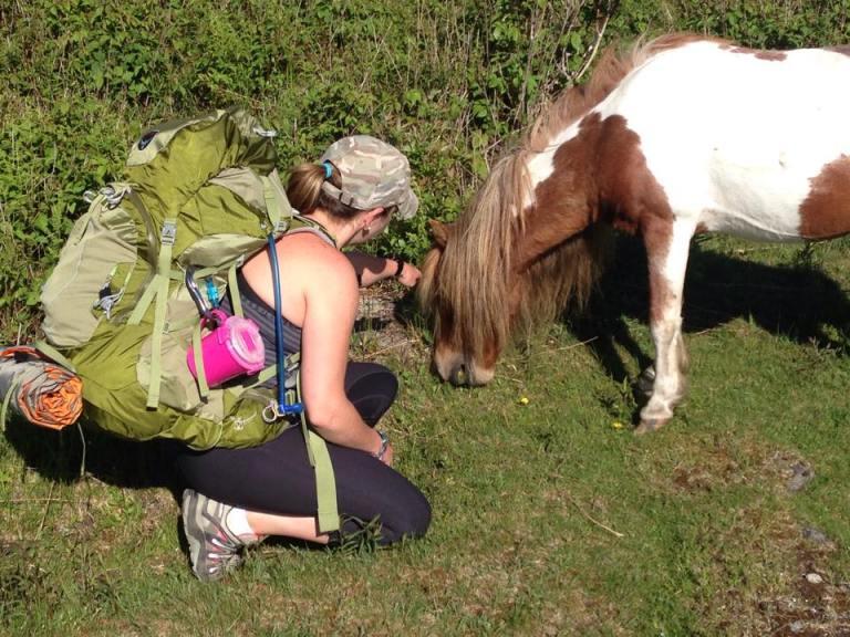 Mount Rogers wild ponies